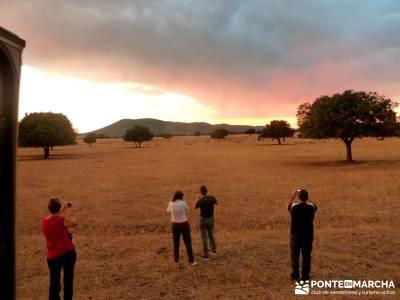 Berrea del Ciervo en Cabañeros y Montes de Toledo en 4x4;viajes mayo senderismo sierra madrid